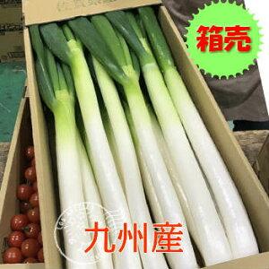 【九州産】【クール便送料無料】箱売り 白ねぎ(長ねぎ・ネギ・ねぎ) 1箱(3kg)