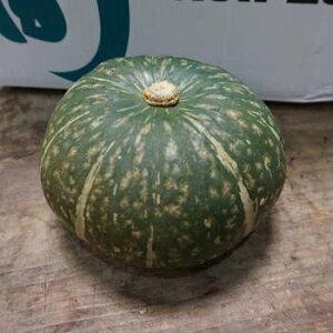 単品 かぼちゃ(カボチャ・南瓜) 1個