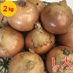 単品 たまねぎ(玉ねぎ・タマネギ・玉葱) L大 2kg