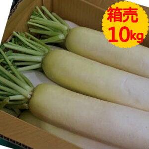 【送料無料】箱売 大根(だいこん・ダイコン)1箱(10kg)