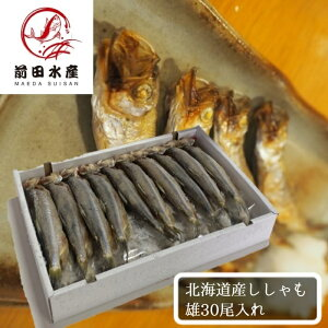 【北海道直送】北海道産 本ししゃも一夜干し・オス 30尾入れ 冷凍 柳葉魚 お中元 お歳暮 ギフト 焼き魚 肴