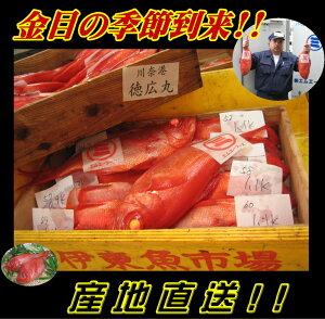送料無料 数量限定東伊豆伊東港水揚 <CAS>特特大(1kg以上)地物金目鯛1尾