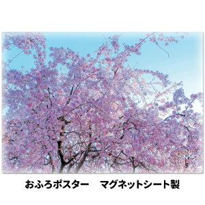 おふろポスター【青空と桜】マグネットシート製【宅配便限定】【有料ギフトラッピング対応可】
