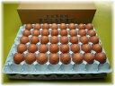 定期購入まごころ卵 80個入り M〜Lサイズ (割れ保証20個含)