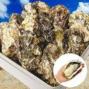 牡蠣 殻付き カキ カンカン焼き 海鮮 バーベキュー セット 広島県産 総量約3kg 大粒 LLサイズ 20~23個入 冷凍 一斗缶 …