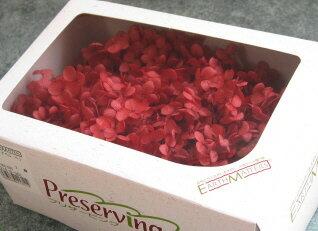 【花材】プリザーブドフラワー・アジサイ 大地農園ソフトアナベルヘッド1箱 レッド