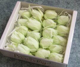 【花材】プリザーブドフラワー 大地農園ローズ スージー1箱20輪入り フレッシュグリーン