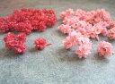 【花材】ドライフラワー・木の実 大地農園フラワーコーン1袋約30個入り