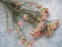 【花材】プリザーブドフラワー ライスフラワー1束 N.チェリーブロッサム