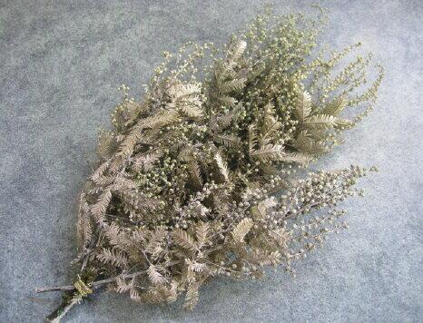 【花材】防虫加工・プリザーブドフラワー 大地農園ミモザアカシア1束 ウォッシュホワイト