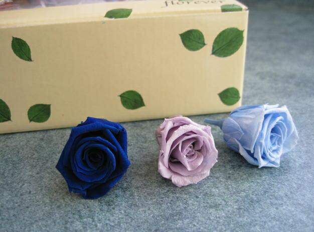 【花材 ローズ】プリザーブドフラワー フロールエバーベイビーローズ・カラーパレット1箱12輪入り ブルーミックス