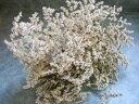 【花材】ドライフラワー 信州産タタリカ1束約40g ナチュラル