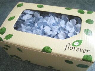 【花材 アジサイ】プリザーブドフラワー フロールエバーアンデスアジサイ1箱 パウダーブルー