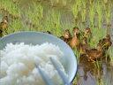 アイガモ農法で育てた有機栽培米【奥越後岩船産コシヒカリ 完全無農薬米 白米 5kg】<あす楽・即日発送>