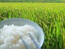 減農薬で育てた安心で美味しい新潟米 【奥越後岩船産コシヒカリ 愛情米 玄米 30kg 新米】