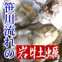 【笹川流れの天然岩牡蠣 むき身 10個セット】新潟県村上市山北の岩ガキは絶品!