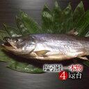 新潟村上伝統の味!【特製 塩引き鮭 4kg台】最高級の鮭はご贈答にも最適