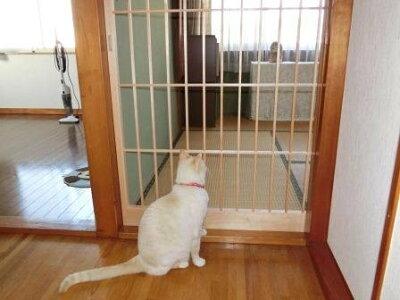 猫ちゃんの柵にも1