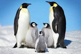ポスター ペンギン/ファミリー PH-0447