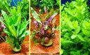 【国産・無農薬】◆水草◆おまかせ ポット入り水草 ☆2ポット☆