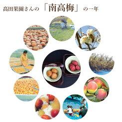 特別栽培南高梅青梅紀州高田果園産地直送4kg