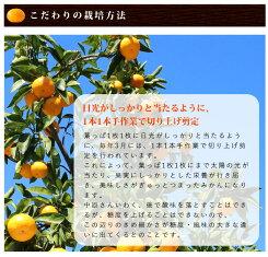 【有機JAS】有機みかん(無階級・サイズ指定なし)中原観光農園5kg__オーガニック国産