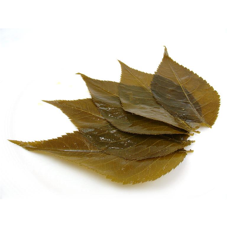 【季節限定】桜の葉 塩漬け(Mサイズ) 50枚_