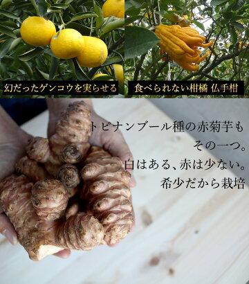 【メール便送料無料】赤菊いもパウダー武蔵庵遠赤乾燥菊芋粉末100g無着色・無添加メール便(代引不可)キクイモに含まれているイヌリンは「たけしの家庭の医学」でも注目されてます。