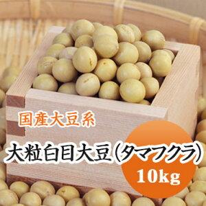 大豆 たまふくら 黄大豆最大サイズ 極大粒白目大豆 タマフクラ 北海道産 高級煮豆用 10kg【令和1年産】大容量