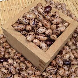 【ゆうパケット 送料無料】【500g】北海道産うずら豆 中長うずら 令和2年産・新豆