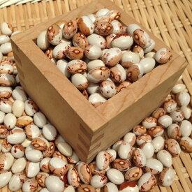 【ゆうパケット 送料無料】【900g】北海道産とら豆 令和2年産・新豆