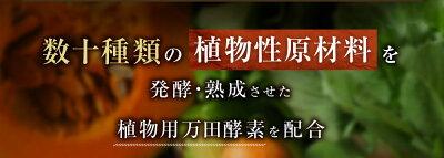 植物用万田酵素ストレートタイプ900ml【送料無料】植物活力液スプレー万田酵素万田発酵【公式】観葉植物野菜花園芸