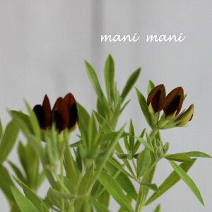 ロータス「 ブラックムーニー」 2.5寸ポット苗 花苗 寄せ植え 庭植え カラーリーフ