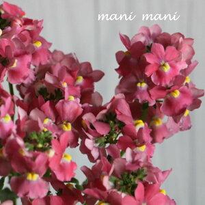 宿根ネメシアメーテル「サーモンピンク」バニラの香り 3.5寸ポット苗 甘い香り ゲブラナガトヨ 寄せ植え リース 花苗 華やか