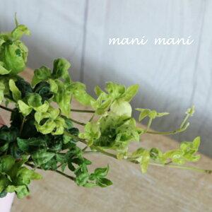 ヘデラ「もこもこ」3.5寸ロングポット苗 寄せ植え リース 花苗 リーフ 観葉植物 室内 インテリア