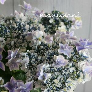 八重咲き紫陽花「万華鏡 銀河」ブルー 6号鉢 希少 開花株 花苗 アジサイ あじさい 母の日 プレゼント