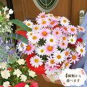 母の日 プレゼント ギフト 花ジャスミン ラベンダー クチナシ等 人気のお花たちスイーツセットにもできますこだわりラ…