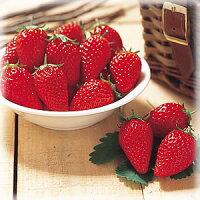 甘〜いイチゴと言えば『章姫(あきひめ)1株』