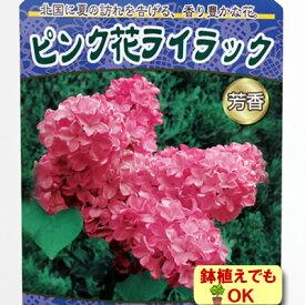 家庭樹落葉高木 ライラック ピンク花 4.5号(13.5cm)ポット