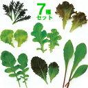 ミニ野菜 毎日摘まめるベビーリーフ7種のタネのセットです栄養価の高い若芽をお召し上がり!業務用小分け第4種または…