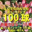 【11月下旬〜年内お届けの予約品です】まとめて植えてチューリップ三昧!5〜10種・各10球合計100球何でもかまへん!ど…