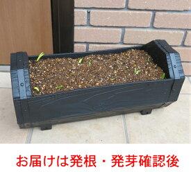 チューリップボックス ロングタイプ鉢寄せ植え 生産者価格で!必ずアイスクリームも入ってます*送料無料・他品同梱不可・関東甲信越地域以外は出荷地からの関係で別途送料が発生します チューリップ 鉢植え