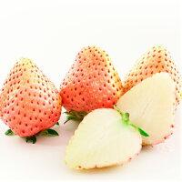 イチゴ(いちご)桃香ポット苗1個いちご苗