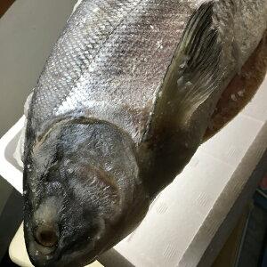 年内間に合う!送料無料 ロシア産銀鮭1本2.5kg塩漬け 塩鮭 姿 鮭 シャケ しゃけ サケ さけ 産地直送 ギフト祝賀品 塩引鮭 塩引き鮭 お取り寄せグルメ お取り寄せギフト まとめ買い 返礼品