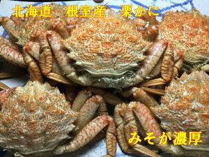 送料無料 北海道 根室産 ボイル栗かに1kg(5〜7匹)塩ゆで かに カニ 蟹 蟹 蟹脚 蟹足 栗カニ くりがに クリガニ 栗がに  ボイル 輸送品質上、九州、沖縄、北海道は冷蔵配送