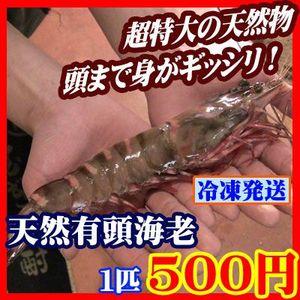 【商番1801】超特大有頭海老 1匹 ジャンボエビ バーベキュー 海鮮 通販特価 おすすめ