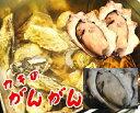 【送料無料】 牡蠣のガンガン焼き 2kg(特製だし・軍手・カキナイフ付)