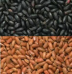 古代米 黒米と赤米のセット 各500g 投函便