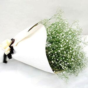 【7日前予約品】 かすみ草 ブーケ ウェディング 『かすみ草 の 花束 』 生花 カスミ草 フラワーギフト お祝い お誕生日 プレゼント ギフト 結婚祝い 還暦祝い 母 女性 贈り物 お見舞い 結婚式