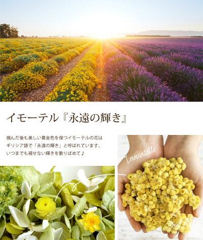 電報紫陽花イモーテルプリザリースプリザード